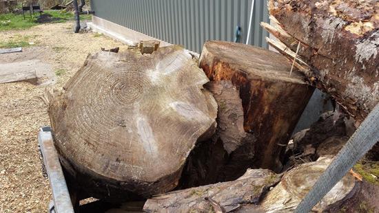 Oversized Logs